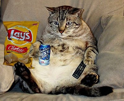 """Lazy VS Beauty: Choose What You Prefer and Win It!"""": couch-potato-cat-giveaway"""