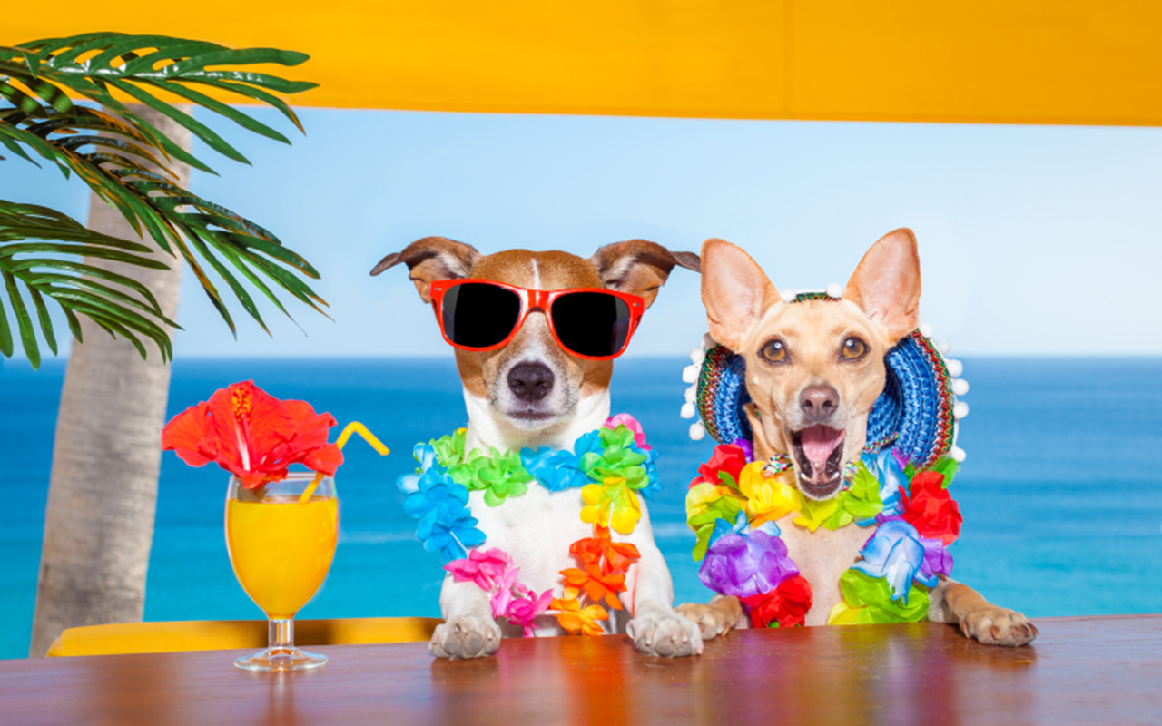 summer-dogs-0