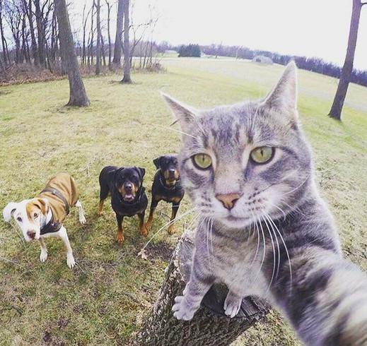 Perfect cat selfie meme