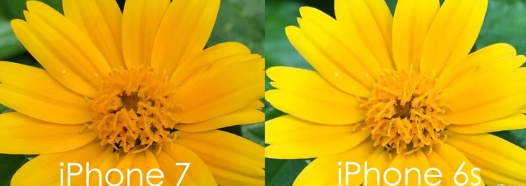 What iPhone Has the Best Camera 2