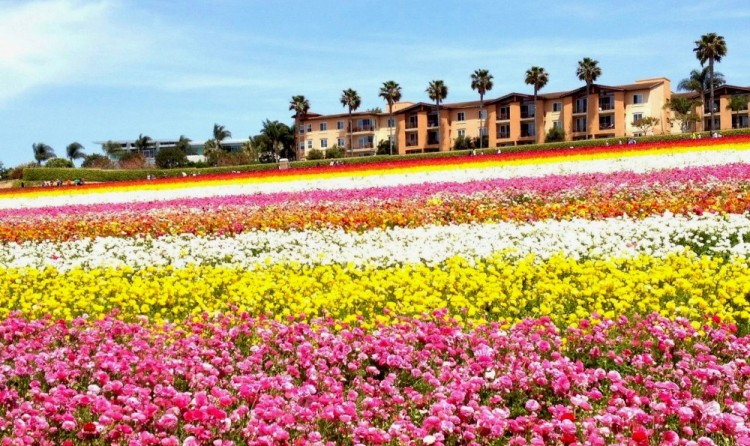 San diego in spring